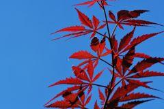 秋の色 3 DSC_8440