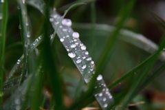 草むら DSC_4782