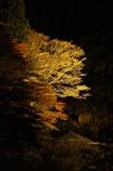 夜の渓谷。奥津渓ライトアップ