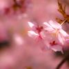 本格的な春も近い