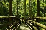 橋の向こうの森