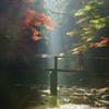 光芒と紅葉