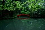 事待池の新緑