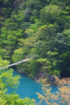 新緑と吊り橋