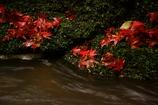 濡れた落葉