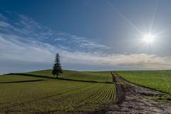 秋蒔き小麦の季節