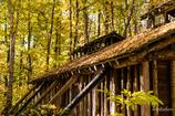 晩秋の伐木所