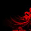 紅のシラベ