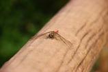 晩秋の蜻蛉 壱