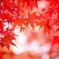 紅葉とプロペラ。。♪