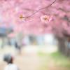 春を見上げて。。♪