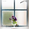 窓辺の春。。♪