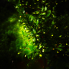 Green Complex