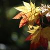 autumn color***
