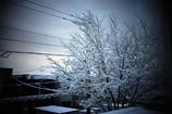 snowday*