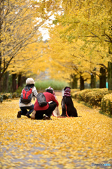 往く秋を愛でる
