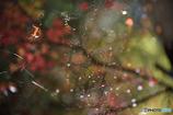 蜘蛛の巣越し
