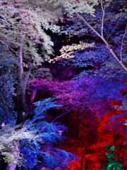 京都 下鴨神社 光の祭典