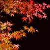 京都 夜楓