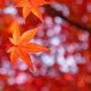 京都 紅葉の姿 II