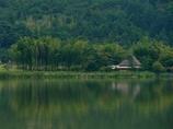 京都 広沢池 水辺の竹林
