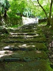 京都 新緑の階段
