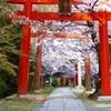 京都 竹中稲荷神社 桜