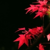 京都 夜楓II