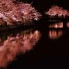 京都 岡崎疎水 夜櫻