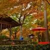 京都 秋の茶席