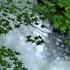 京都  夏の水辺
