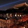 京都 清水寺の夜楓