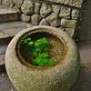 京都 手水鉢の夏景色