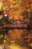 晩秋の光の中