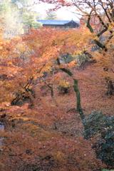 東福寺 紅葉の絨毯