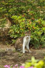 小江戸川越のスターバックス その10 中庭の猫