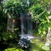 新木場熱帯植物園の温室