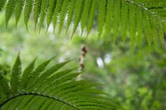 浦内川ジャングル 4