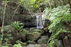浦内川ジャングル 2