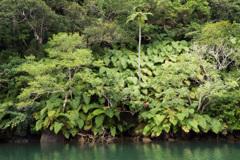 浦内川ジャングル 1