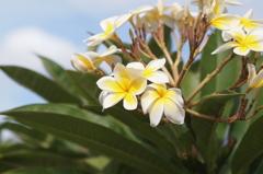 Waimea Town, Kauai 1
