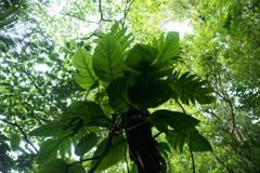浦内川ジャングル 3