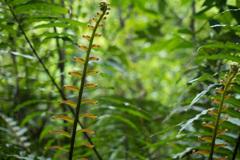 浦内川ジャングル 5