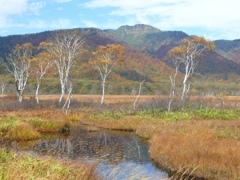 白樺と景鶴山