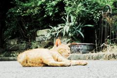 猫撮り散歩1972
