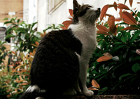 猫撮り散歩1512