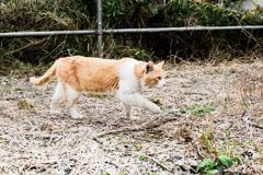 猫撮り散歩2124