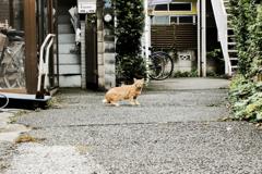 猫撮り散歩2086