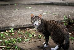 猫撮り散歩2017