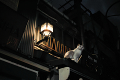 猫撮り散歩197Z